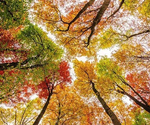autumn, trees, and leaves image