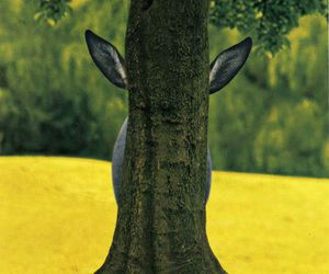 animal, tree, and nature image