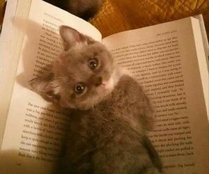 cat, funny, and cute image