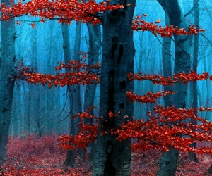 tree, fall, and red image