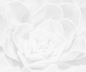 white, aesthetic, and flowers image