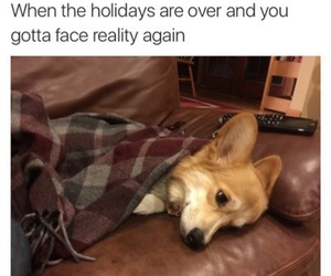 funny, holiday, and dog image