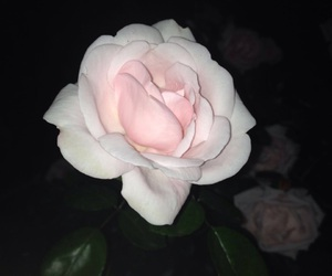dark, flower, and night image