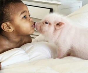animal, baby pig, and cute image