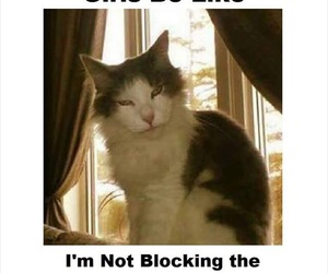 cats, funny, and funny animals image