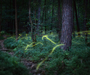 fireflies, forest, and night image