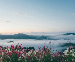 flowers, nature, and sky image