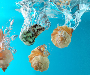 water, shell, and summer image