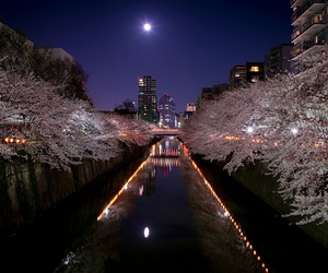 cherryblossom, japan, and moonlight image
