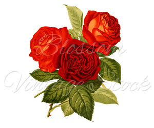 antique rose, etsy, and bunch image