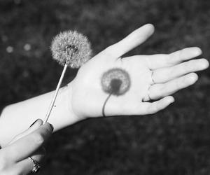 black, hand, and white image