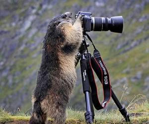animal, marmot, and photograph image
