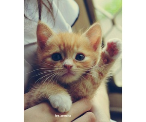 cute, cat, and kitty image