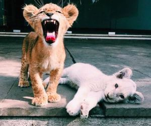 kitten, tiger, and tumblr image