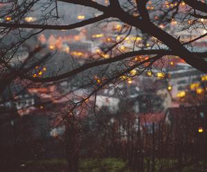 autumn, light, and fall image