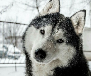 animal, snow, and dog image