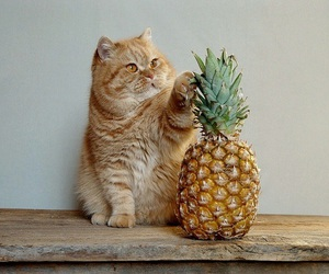 cat, cute, and pineapple image