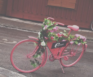 bicycle, flowers, and coctail image