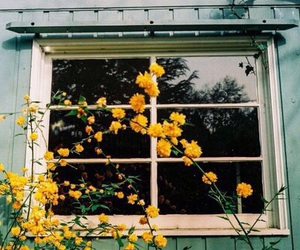 flowers, yellow, and window image