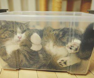 cat, maru, and cute image