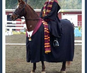harry potter, funny, and horse image
