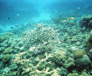 analog, australia, and Cairns image