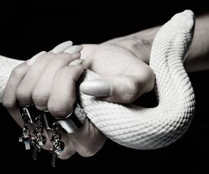 snake, rings, and white image