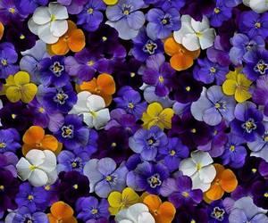 beautiful, flowers, and purple image