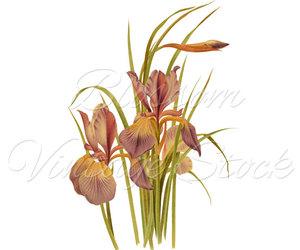 art, flower, and botanical prints image