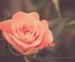 floral, macro, and nature image