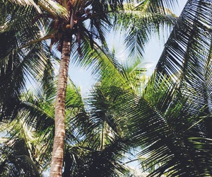 costa rica, natural, and palms image