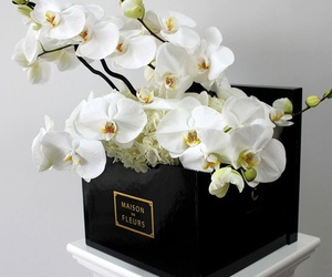 flowers, orchid, and white image