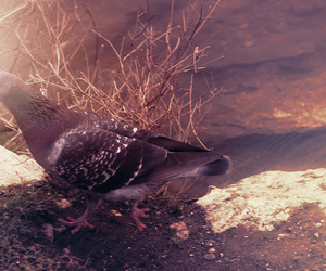 drain, filter, and pigeon image