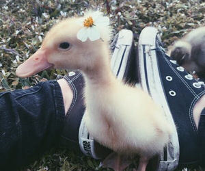 duck, flowers, and cute image