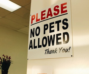 canon, pets, and sign image