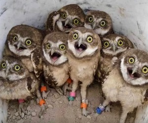 owl and funny image