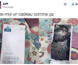 cadeau, chaton, and chat image