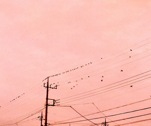 aesthetic, birds, and indie image
