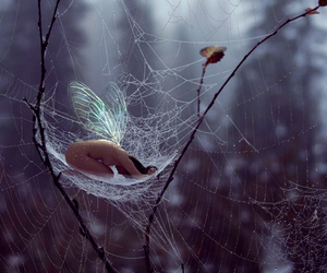 fairy and web image