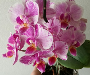 flower and orchidea image