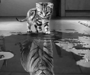 art, cutie, and water image