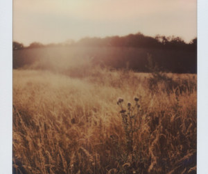 analog, color, and evening image