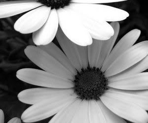 b&w, black and white, and simple image