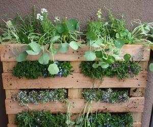diy, garden, and flowers image