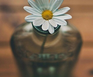 flowers, vintage, and grunge image