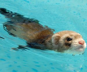animal, cute, and water image