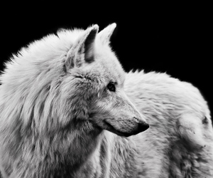 wolf power inspiration image
