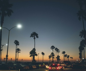palms and night image