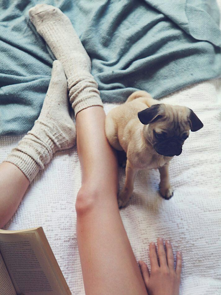 animal, love, and puppy image