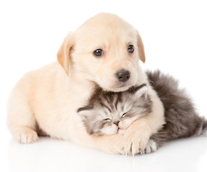 animal, animals, and cats image